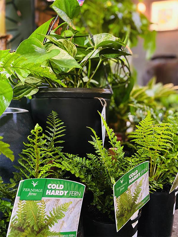 Nursery plants contact 1