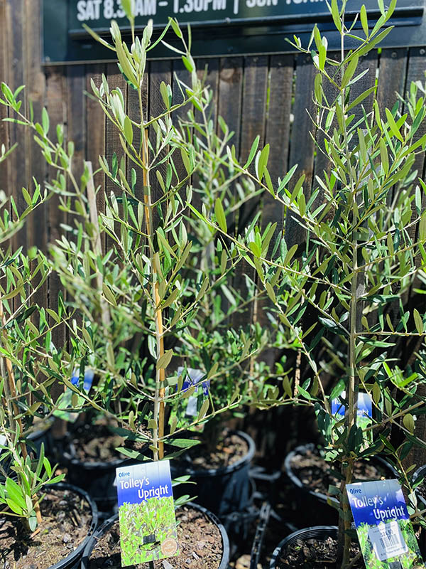 Nursery plants contact 2