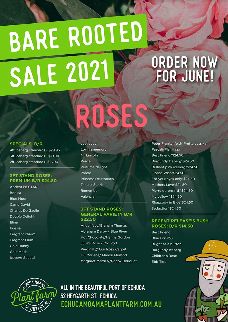 Bare Rooted Rose List